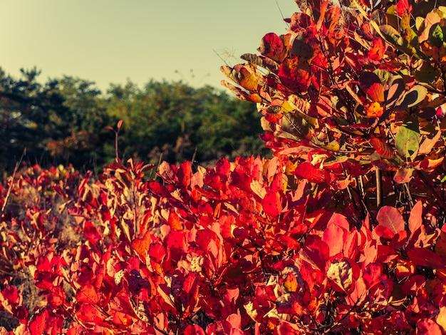 가을 날 숲에 빨간색과 노란색 잎이 있는 나무와 덤불. 가을의 색