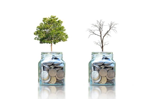 흰색 배경에 격리된 돈을 절약하기 위해 병에 나무와 죽어가는 마른 나무