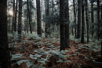 Trees and ferns growing in forest