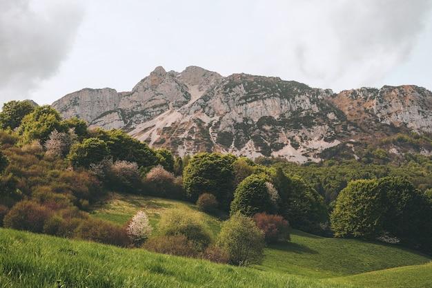 Деревья и гора