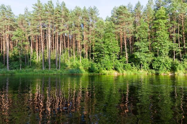 화창한 밝은 날씨의 나무와 식물, 공원의 여름이나 봄이나 다른 종의 나무의 단단한 배경