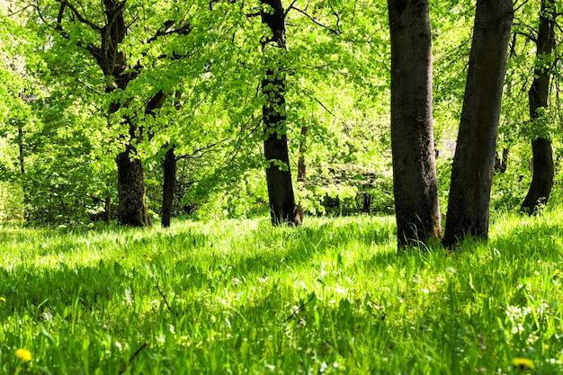 Деревья и растения в солнечную яркую погоду, летом или весной в парке или в лесу сплошной фон из деревьев разных пород