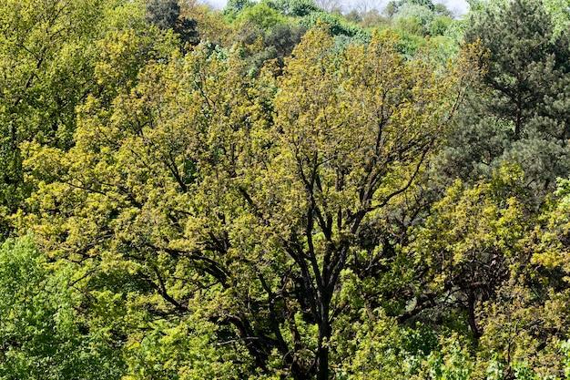 Деревья и растения в солнечную яркую погоду летом или весной в парке или в лесу из сплошных деревьев разных пород