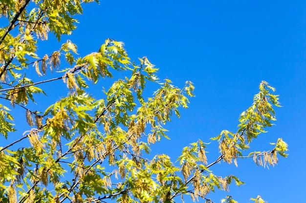 Деревья и растения на фоне голубого неба в яркую солнечную погоду