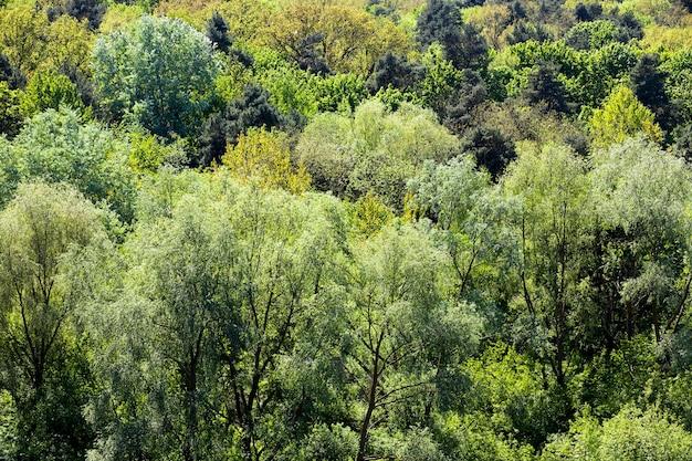 Деревья и растения