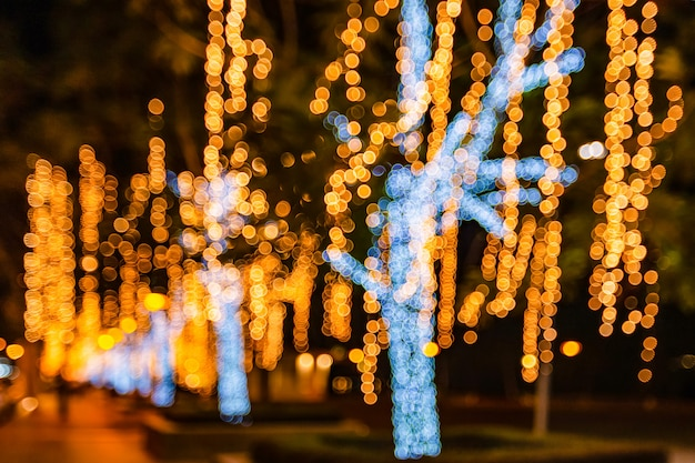 The trees are decorated with light bulb, normal shoot and defocused