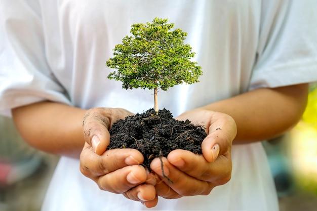 人間の手による土壌、アースデイのコンセプト、地球温暖化キャンペーンで木が育っています。