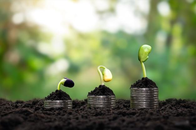 木は、財政と投資のアイデアとして、お金と肥沃な土壌で成長しています。 Premium写真