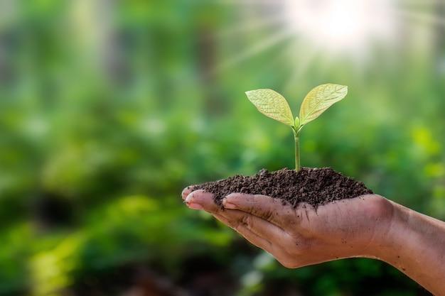 木は、自然の緑の背景、植物の成長と環境保護の概念で人間の手で地面に植えられています。