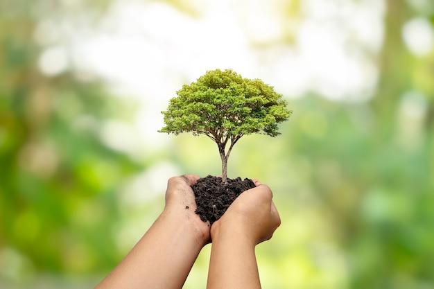나무는 자연 녹색 배경, 식물 성장 및 환경 보호의 개념을 가진 인간의 손에 땅에 심어집니다.