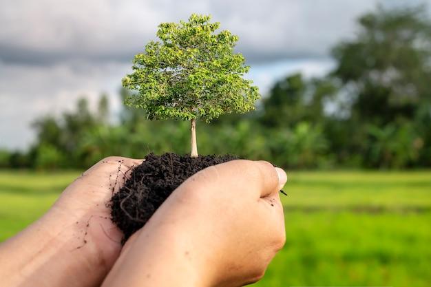 나무는 자연 녹색 배경, 식물 성장의 개념 및 환경 보호를 가진 인간의 손에 땅에 심어집니다.