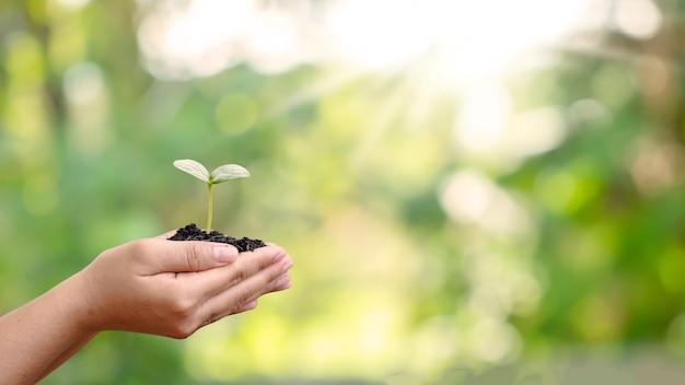나무는 자연적인 녹색 배경을 가진 인간의 손에 땅에 심어진다