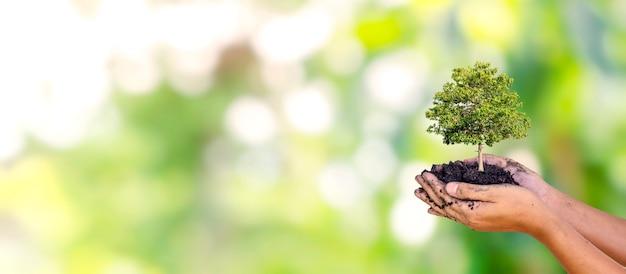 Деревья посажены на земле в руках человека с естественным зеленым фоном.