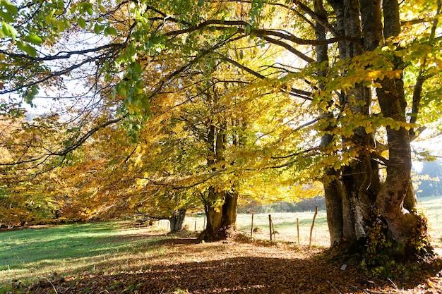 Trees in autumn season background. beauty in nature. autumn lansdscape