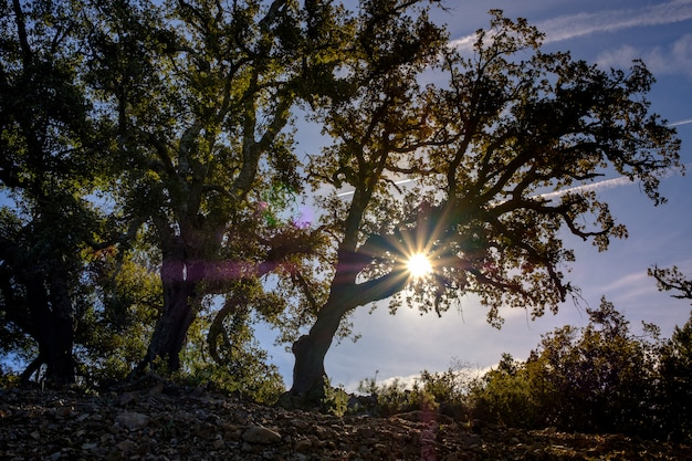 Trees in backlight