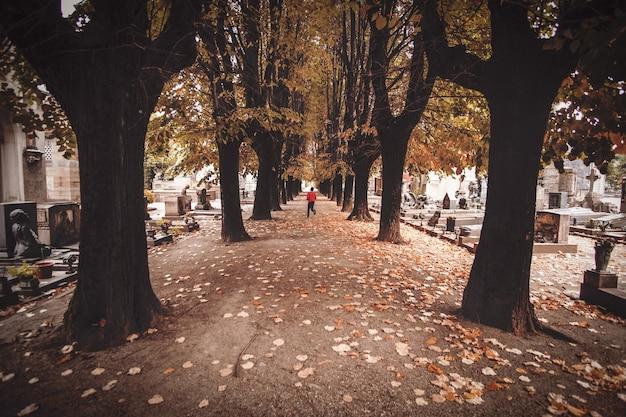 コンクリート道路脇の木々