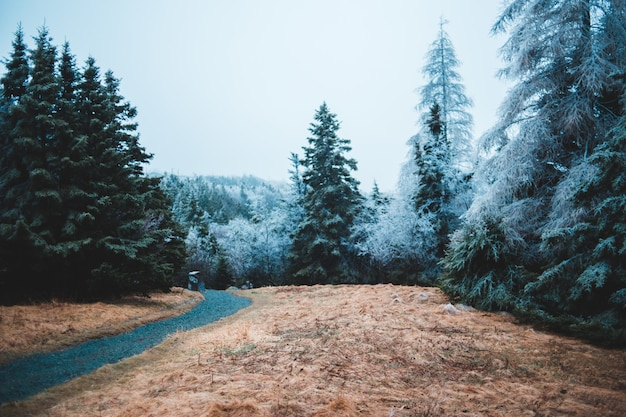 冬の道路脇の木