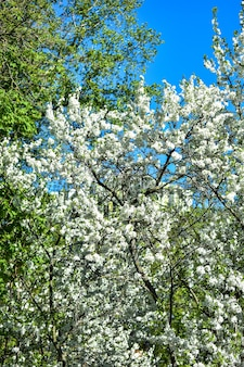 Trees bloom and bloom in spring