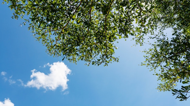 Trees branches frame beautiful green leaves against clear blue sky and heart clouds image for nature background and spring nature design.
