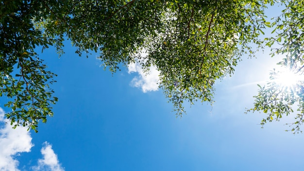 Trees branches frame beautiful green leaves against clear blue sky