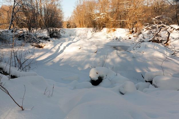 Деревья, кусты и другие растения, покрытые снегом и морозом в зимний период.