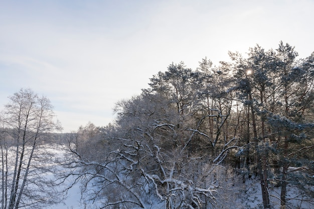 Trees, bushes and other plants covered with snow and frost in the winter season