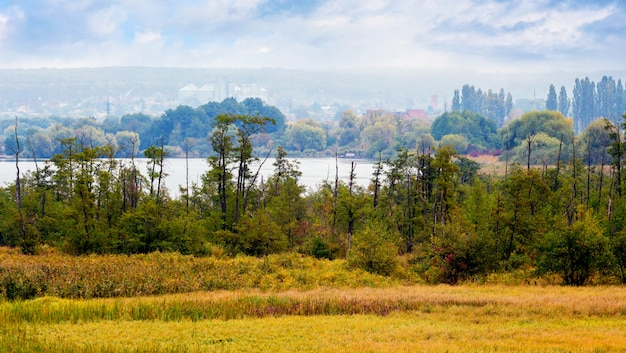 川の風景のそばの木