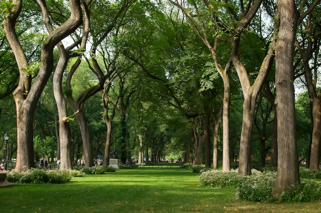 Trees in central park