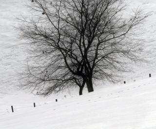 雪の旅に覆われた木