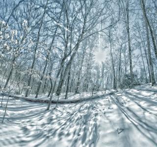 雪に覆われた木