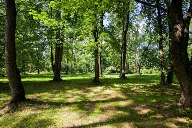 Деревья, покрытые зеленой листвой весной или летом, приятная красивая природа и свежий воздух, деревья растут возле поля с зеленой травой