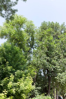 Trees covered with green foliage in summer
