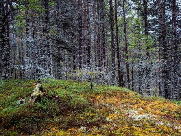이끼로 덮인 나무