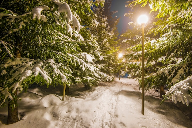 雪に覆われた木々、暗い空、雪の中で輝くランタン