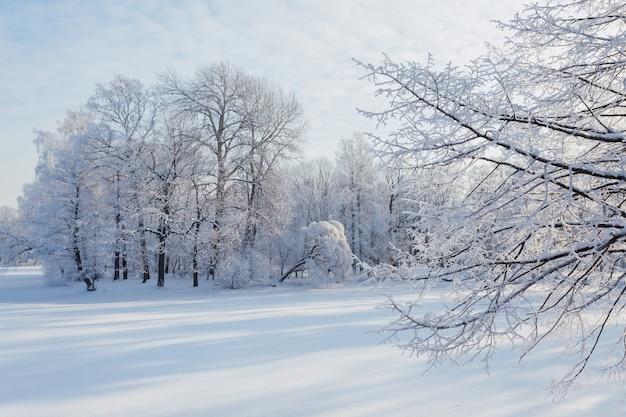 나무는 상트 페테르부르크, 러시아에서 맑은 겨울 날에 눈으로 덮여 있습니다.