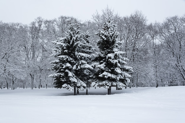 Trees covered with snow in the winter garden. the winter's tale at the kolomenskoye park.