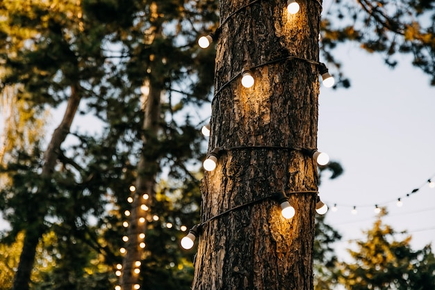 Деревья украшены лампочками в парке вечером