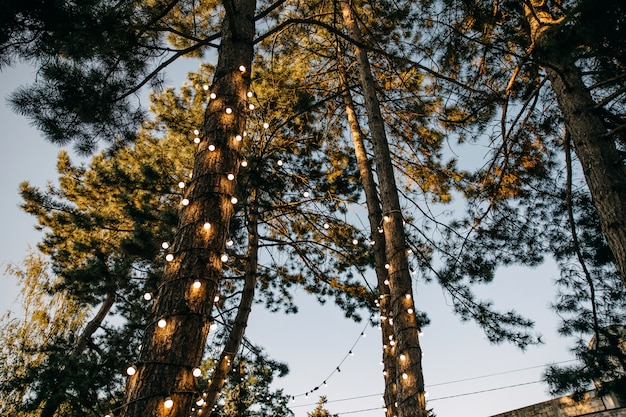 Trees decorated with light bulbs in a park in the evening