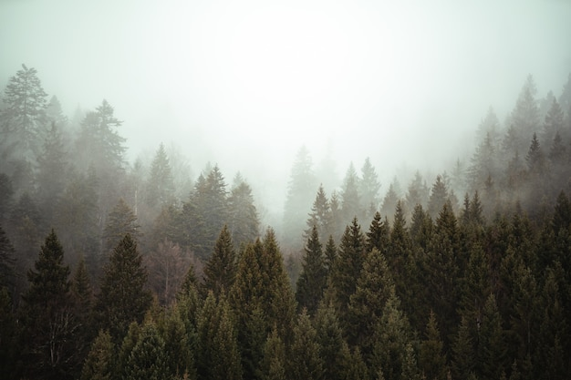 Trees next to each other in the forest covered by the creeping mist