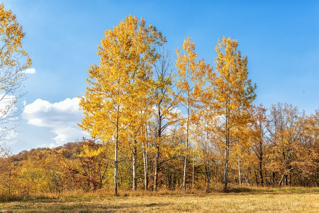 Trees on the edge of the forest in autumn with golden and purple leaves