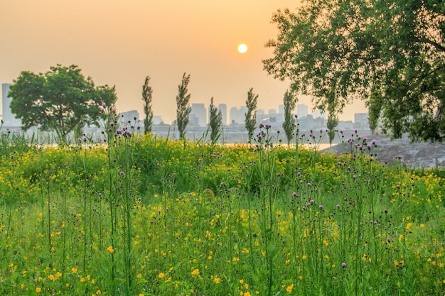 Trees and flowers in seoul, south korea during sunset with buildings