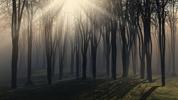 Trees on a foggy day