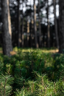 Trees and forest backgrounds