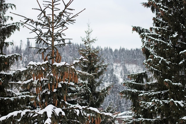 Trees in the forest covered in snow during winter