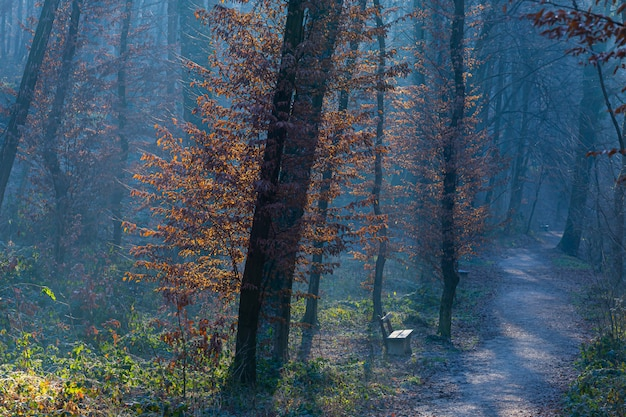 Trees in the gloomy forest in maksimir, zagreb, croatia