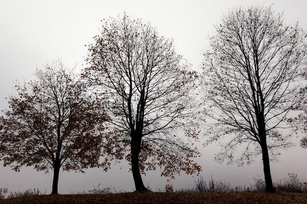 秋の季節の木、グラフのクローズアップ。通りは濃い霧と視界不良が見られます。