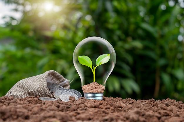 Деревья растут в энергосберегающих лампах на земле, энергосберегающих и экологических концепциях в день земли.