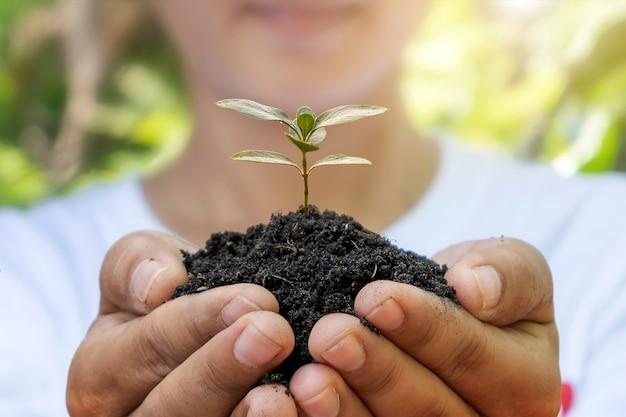 木は人間の手、森林再生の概念、地球温暖化キャンペーンによって土壌の中で成長します。