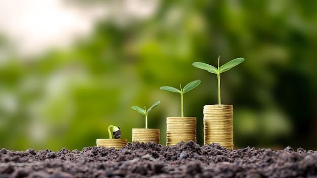 Деревья растут на куче золотых монет на земле, подсказки по развитию бизнеса. инвестиции в агробизнес и переработку сельхозпродукции