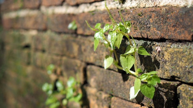 Trees growing in the brick